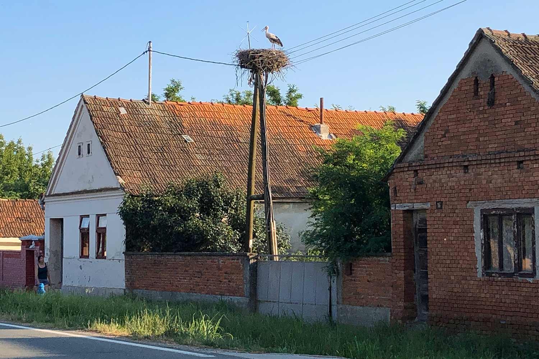 Stork nest in Slavonija