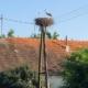 Storks in Slavonija